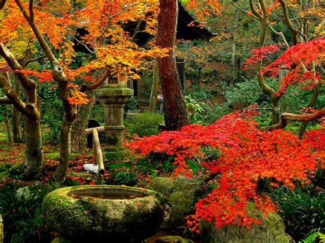 autumn garden beautiful kyoto gardens japan world for travel