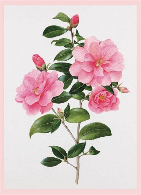 botanical painting in gouache 184994265x 37 best images about botanical illustration on