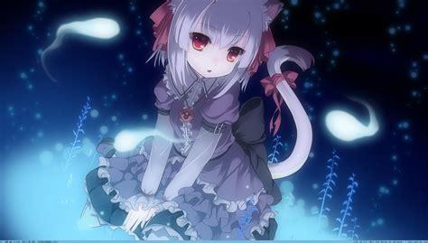 wallpaper anime cat girl catgirl wallpaper wallpapersafari