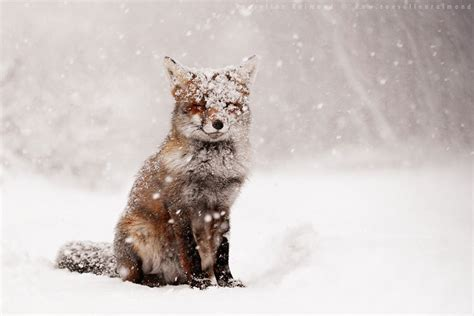 animals in the winter 19 gorgeous photographs of animals during winter time