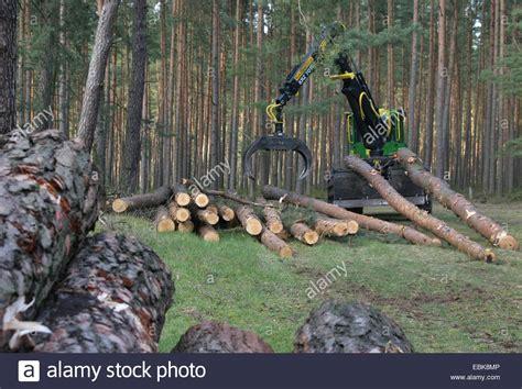 Timber Faller Stock Photos Amp Timber Faller Stock Images