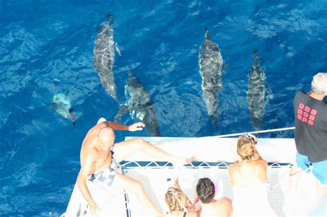catamaran mauritius dolphins swim with dolphins mauritius jp henry charters