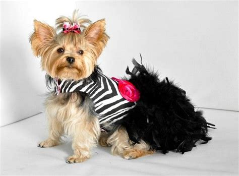 how to put a harness on a yorkie 17 best ideas about pet fashion on fashion animal clothes and dogs in