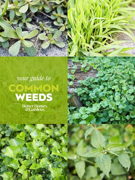 weed identification guide  homes gardens