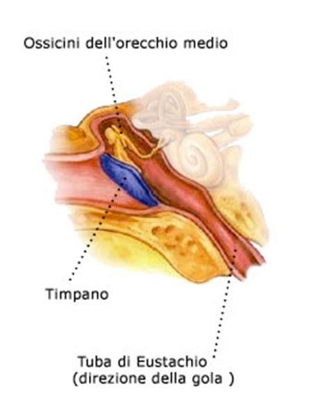 orecchio medio e interno l orecchio medio centro acustico drigo