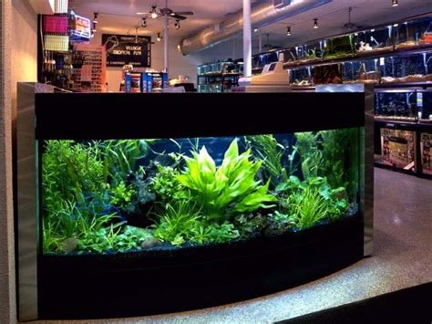 how to aquascape a freshwater aquarium best 25 aquarium set ideas on pinterest fish tank freshwater aquarium plants and