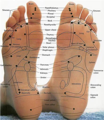 sections of the foot vast reservoir of useless knowledge reflexology poop massage