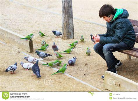 alimentazione piccioni pappagalli e piccioni d alimentazione ragazzo immagini