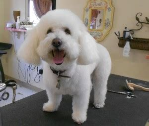 restaurants that allow dogs near me service pet care facility for dogs and catsfull service pet care facility for