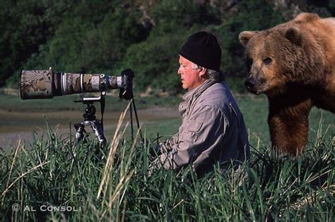 best wildlife photography these 20 images prove that being a wildlife photographer