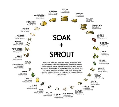 whole grains phytic acid your guide to soaking sprouting whole grains beans