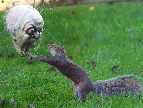 squirrel joins in the with terrifying