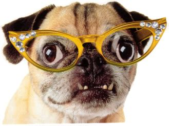 pug with glasses pug with glasses gif by painthorse72 photobucket