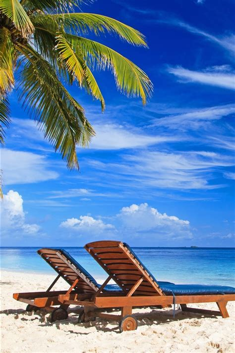 wallpaper palm trees paradise beach deck chair sea
