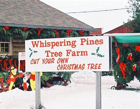 cut your own christmas tree westminster md whispering pines tree farm thome road tree farm christmastreefarms net