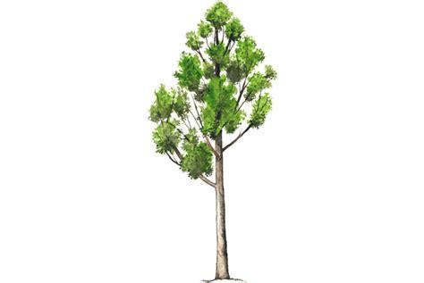 X Mas Tree by Vecinos Verdes