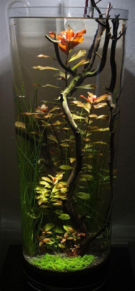 Vase Aquarium by Best 25 Vase Fish Tank Ideas On Betta Fish