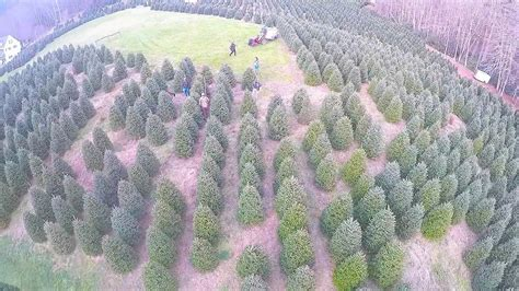 tom sawyer christmas tree farm and elf village on vimeo