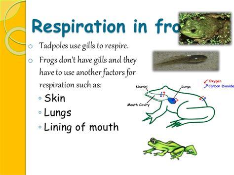 Cutaneous Respiration In Frog Essay cutaneous respiration in frog