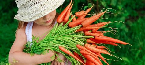 10 Facts About Organic Food by 50 Random Facts About Organic Food Factretriever