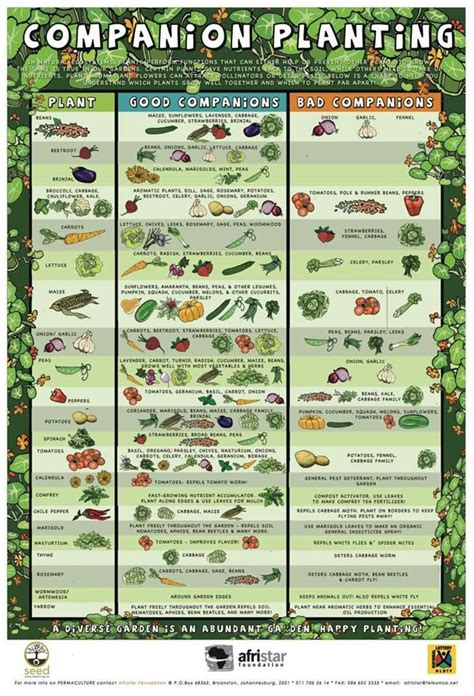 Companion Planting And Hows Your Garden Growing Faith Vegetable Garden Companion Planting Guide