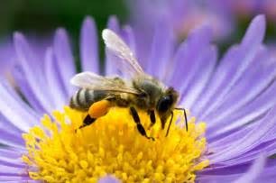 Bee Garden Flowers The Buzz About Bees Climate Change And Your Garden Huffpost