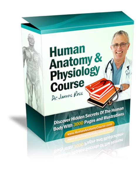 Human Anatomy And Physiology Study Course Review Exposes