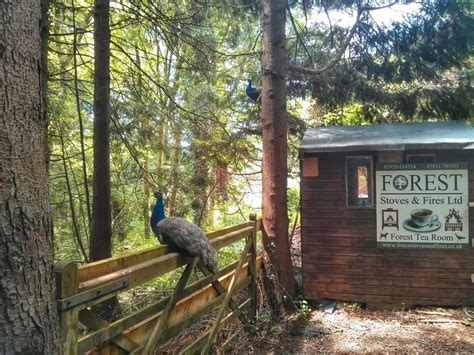 Tea Room Forest by Forest Tea Room In Top 10 Cardiff Coffee Shops