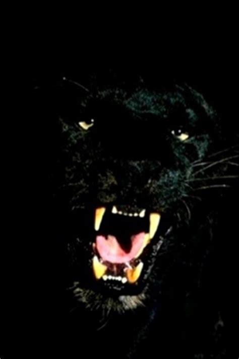 Lu Mobil Panther wallpaper panter gebrul voor iphone