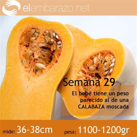 Calendario De Embarazo Semana A Semana Embarazo Semana A Semana Etapas Embarazo Calendario