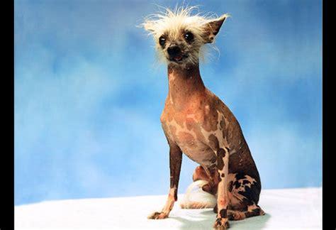 imagenes de animales feos image gallery perros feos
