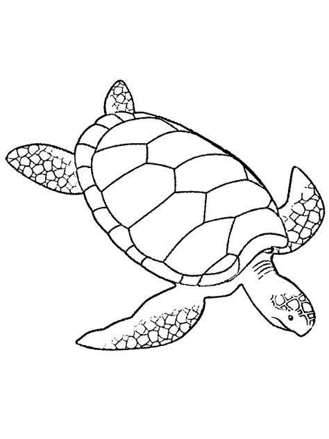 how to draw marine life