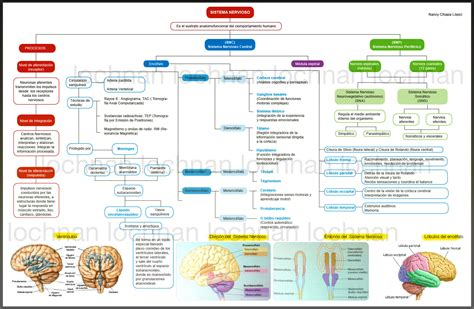 mapa conceptual del sistema nervioso 1000 images about learning med on pinterest