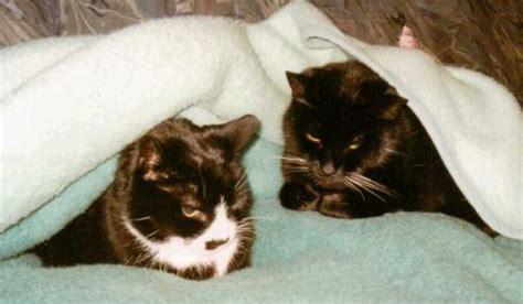 wann wird katze ruhiger seniorkatzen ab wann ist eine katze ein senior