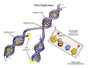 synthesis template template in dna synthesis bestsellerbookdb