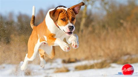 amazing free dog wallpapers to download graphicmania 54 dog backgrounds 183 download free amazing wallpapers of