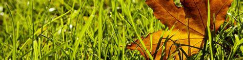 Rasen Im Herbst Vertikutieren by Rasenpflege Im Herbst Den Rasen Richtig Winterfest Machen