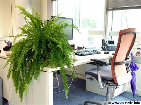 plante bureau d 233 coration bureau plantes