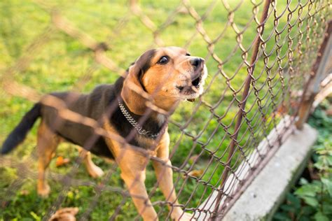 how to keep dog from barking how to use your fence to keep your dog from barking