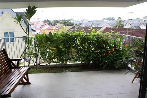 siepi da terrazzo sempreverdi siepi da balcone siepi come realizzare le siepi per il