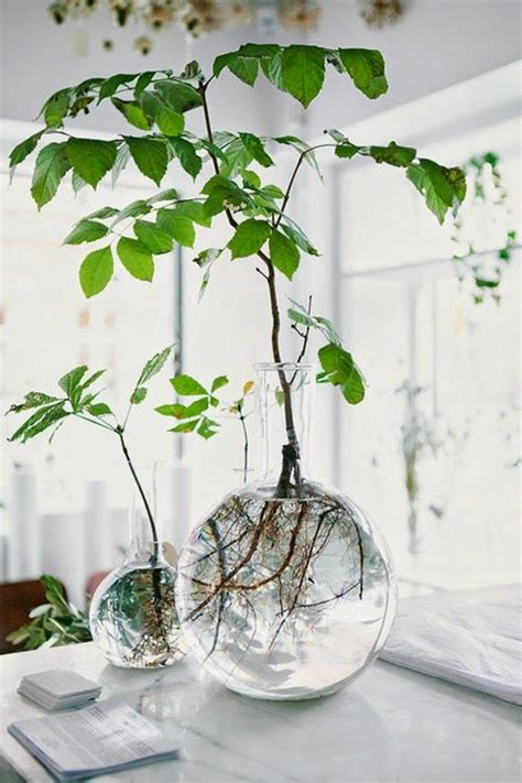 Plantes D Interieur Decoration by La Plante Verte D Int 233 Rieur Archzine Fr