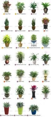 Bathroom Floor Plan Design Tool 1000 ideas about tropical house plants on pinterest
