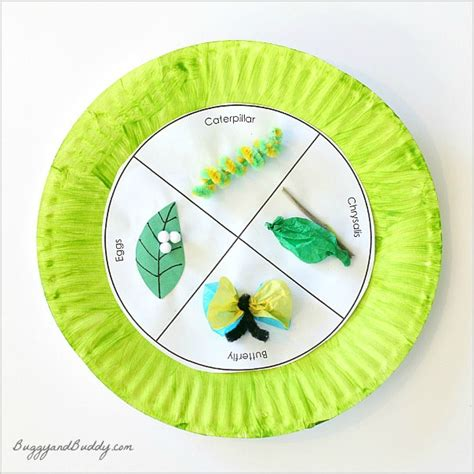 How To Make A Cycle With Paper - butterfly cycle paper plate craft buggy and buddy