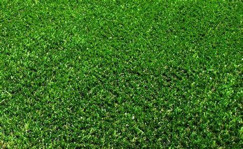 windsor green couch roll out instant lawn types for adelaide gardens