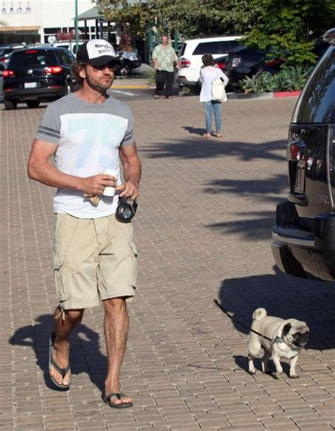 gerard butler pug 17 best images about pugs on duke minogue and