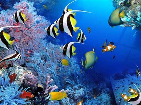 wallpaper alam rar حوض سمك مجسم ثلاثى الابعاد على سطح المكتب aqua real برامج