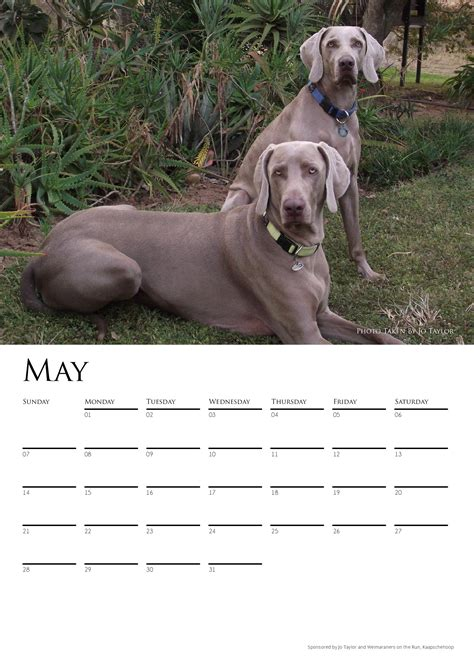 Calendars For Sale Calendar 2017 Available For Sale Weimaraners In South Africa