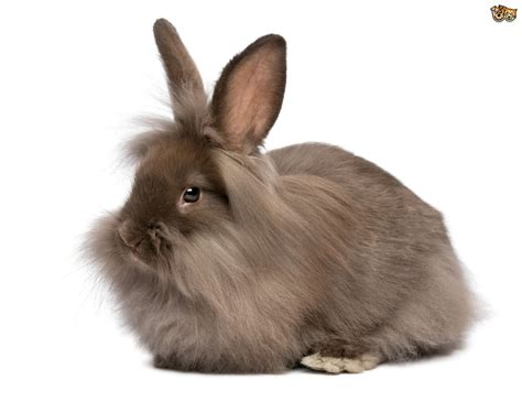 and rabbit the ins and outs of rabbit behaviour pets4homes