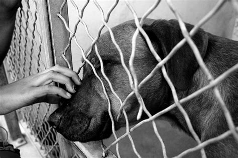 animal shelter dogs file at shelter jpg