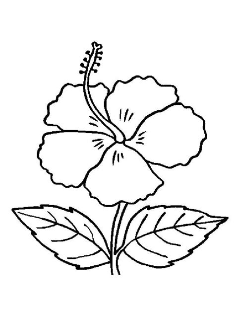 flower coloring pages color flowers online page 1 hibiscus flower coloring pages download and print